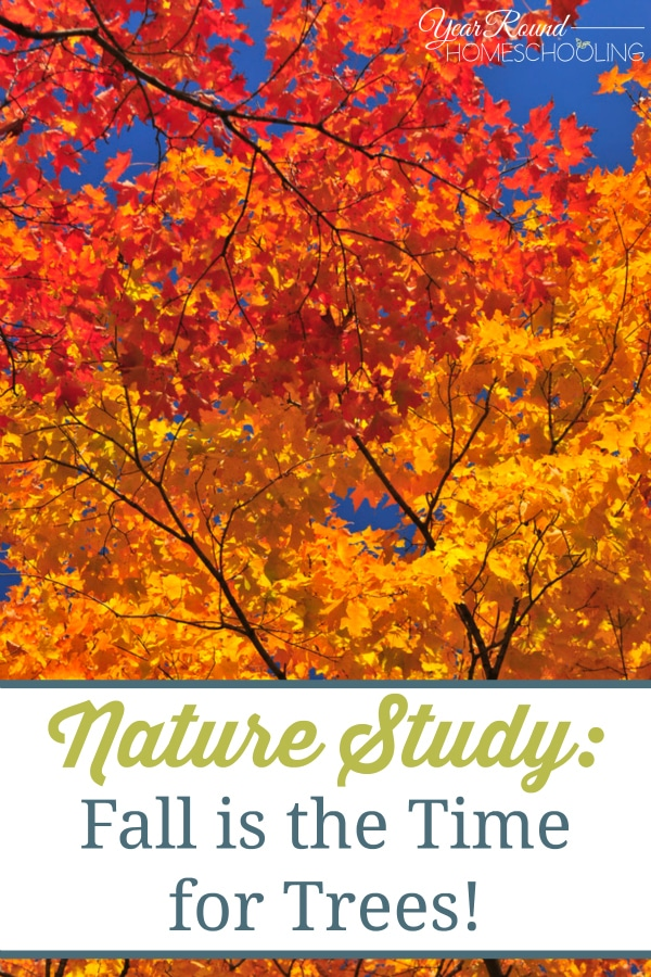 Nature Study: Fall is the Time for Trees - By Beth
