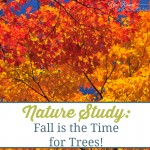 Nature Study: Fall is the Time for Trees!