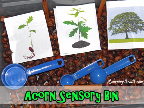 fall activities for preschoolers: acorn sensory bin
