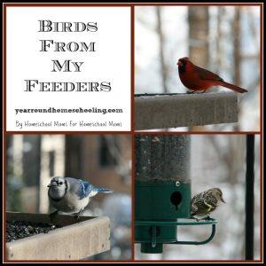 Birds from my feeders
