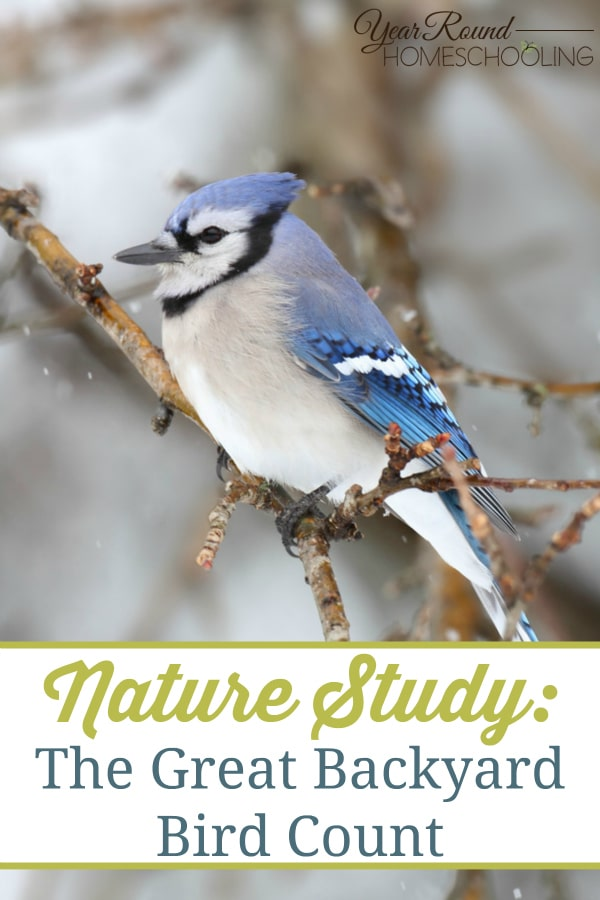 the great backyard bird count, nature, homeschool, homeschooling