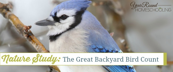 nature study the great backyard bird count year round homeschooling