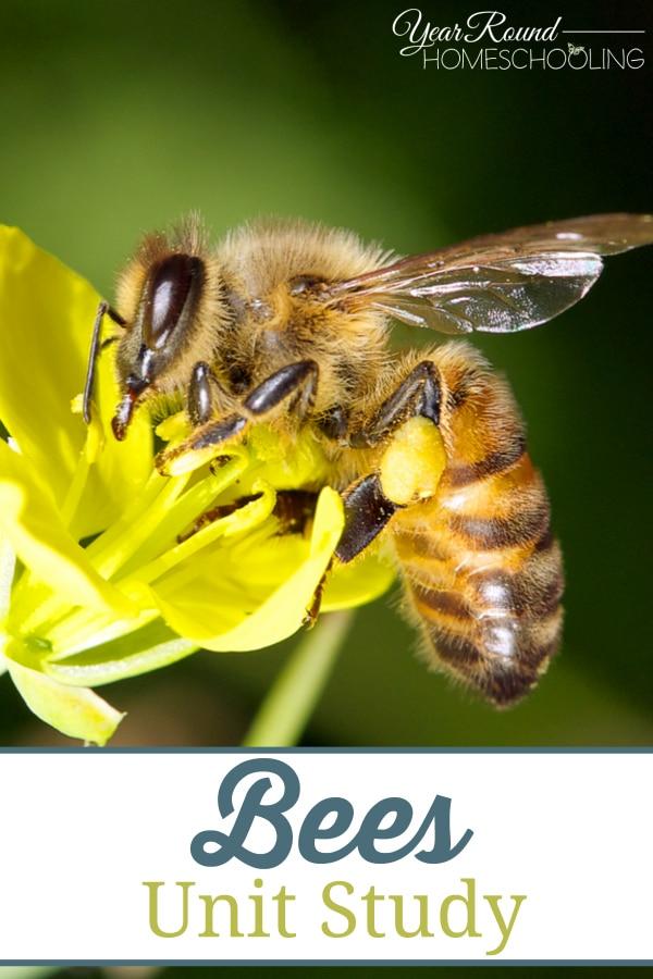 bees, bee, unit study, homeschool, homeschooling