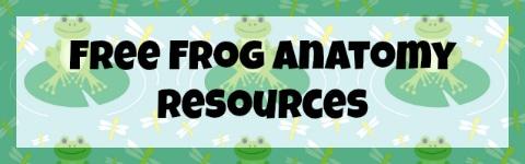 FrogAnatomy