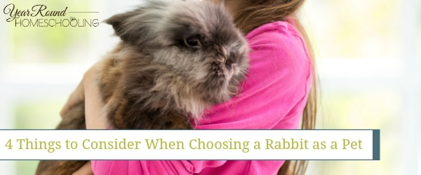 rabbit, pet, homeschool, homeschooling