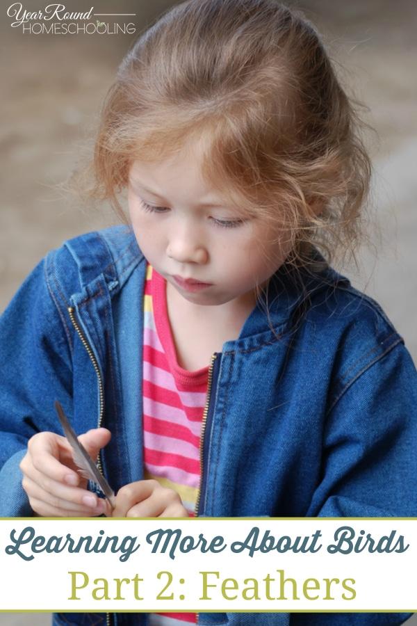 birds, feathers, nature, science, homeschool, homeschooling
