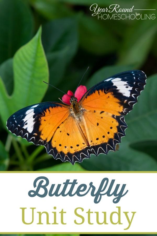 butterfly, unit study, butterflies