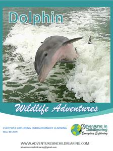 Dolphin Wildlife Adventures