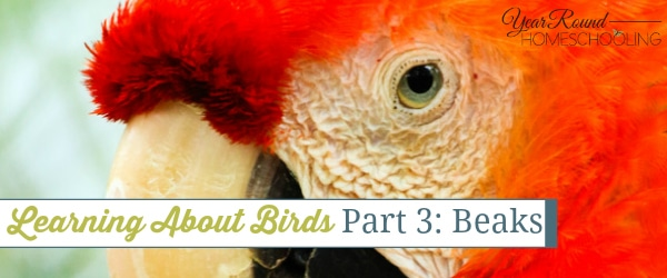 learning about birds, birds beaks, bird study, nature study, nature, birds, beaks, homeschool, homeschooling