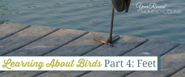 Learning About Birds, Part 4: Feet