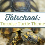 Totschool:  Tortoise Turtle Theme