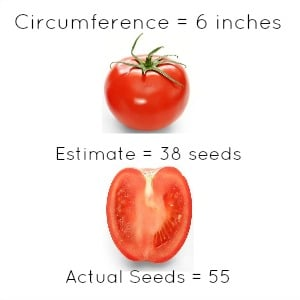 tomato3-YRH