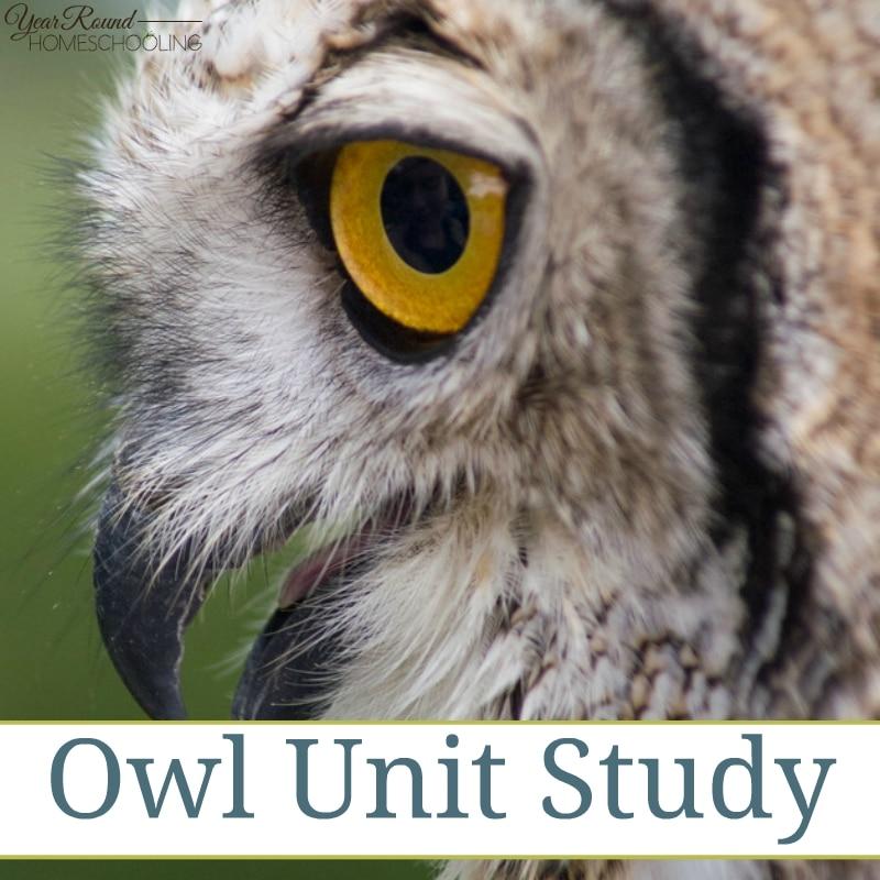 Arachnid Unit Study Owl Unit Study ...