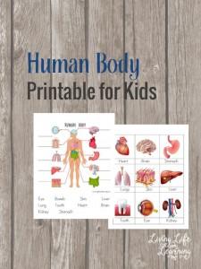 Free Human Body Printables for Kids