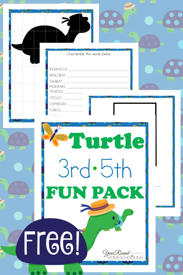 Turtle 3rd-5th Fun Pack