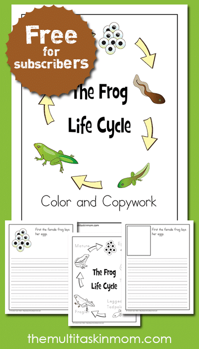 Free Frog Life Cycle Color and Copywork