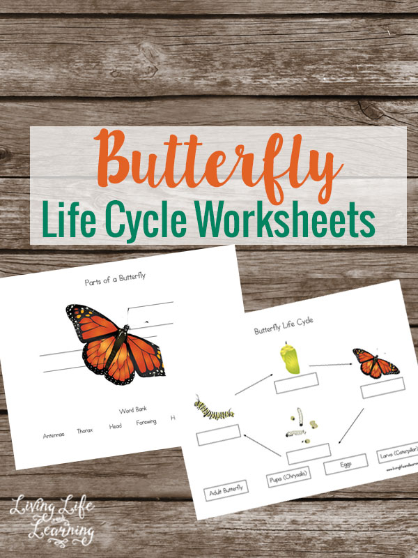Free Life Cycle of a Butterfly Worksheets