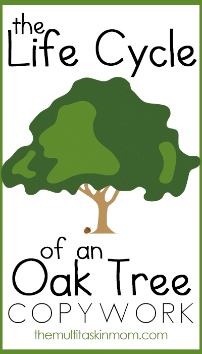Free The Life Cycle of an Oak Tree Copywork Pack