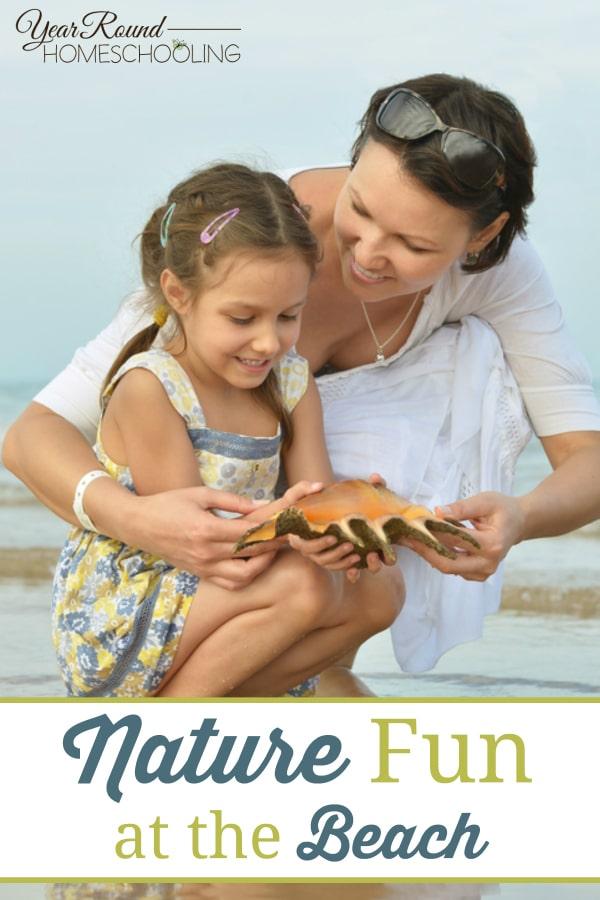 beach nature, nature fun, fun beach nature ideas, nature, beach, homeschool at the beach, homeschooling at the beach, beach homeschooling, homeschool, homeschooling