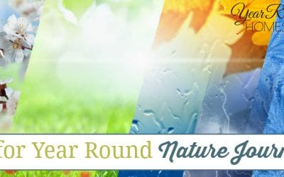 Year Round Nature Journaling Ideas