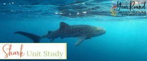 shark unit study, unit study shark, unit study on sharks, sharks unit study, shark study, sharks study, shark unit, sharks unit
